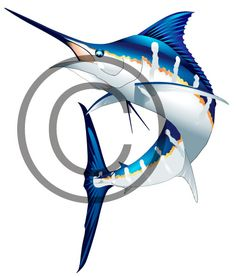 Beautiful custom vector illustration of a jumping blue marlin. Great fort-shirt designs, websites, boat graphics, signs and more. $50.00