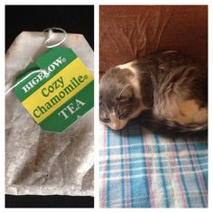 Chamomile tea bag to calm your kitty down. The tea bag i used was cozy chamomile, caffeine free. She played with it for about 10 minutes, and 10 minutes later she was comfy cozy on my bed fast asleep. Good for female cats that are in heat to get them to stop crying and moaning.