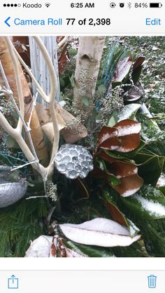 Blue accent amongst fresh snow Christmas Urns, Blue Accents, Snow, Fresh, Plants, Design, Decor, Decoration, Decorating