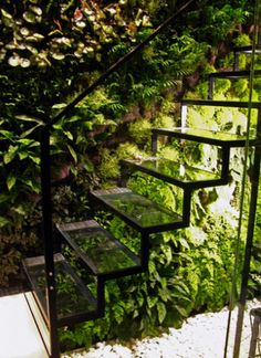 glass stairs. vertical garden.