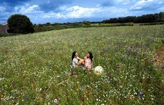 Wildflower Meadow in Summerset Field of Dreams