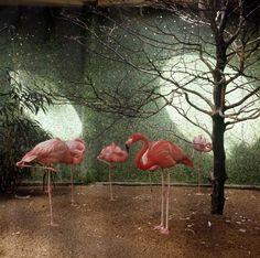Victor Meeussen | Flamingo's, Rotterdam (1965)