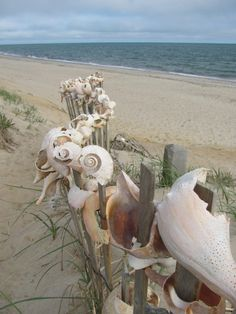Shell fence. Cool, but also ever so slightly creepy.