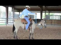 First Step To Starting Your Horse, How To Start Your Horse In A Safe and Progressive Manner