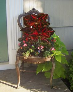 The red coleus and green sweet potatoes vine go together nicely