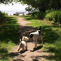 My view. #westie #myview #423 #theview #dogsofinstagram #dogs #terrier #instadog #mutt #kiss #aplacetolovedogs #doglover #greeting #morning #postcard #westhighlandwhiteterrier #whwt #dogsatplay #dogpark #pups #gameday #adogslife #friends