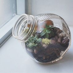 One of my little glass worlds in an antique pickle jar. I love the texture that the rippled glass gives and the ability of this container to sit on its side.  #terrarium #terrariums #antique #reuse #repurpose #hensandchicks #succulent #succulents #succulentgarden #succulove #succulentlove #tillthesill #moss #rocks #littleglassworlds #opensystem #windowsill