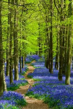 Bluebell Forest, Arlington  I could get lost in the beauty of this forest!
