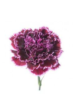 Carnation birth flower tattoo