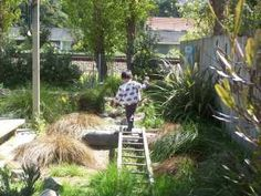 a naturalized preschool environment...this is what I want.  lots of plants, that children can move amongst.