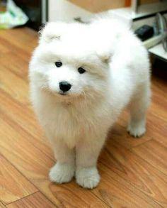 Gorgeous pup. Looks like a polar bear pup.