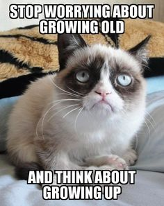 super Ideas for funny memes sarcastic seriously grumpy cat Funny Animal Quotes, Animal Jokes, Cute Funny Animals, Funny Animal Pictures, Cat Sayings, Grumpy Cat Quotes, Funny Grumpy Cat Memes, Funny Cats, Funny Memes