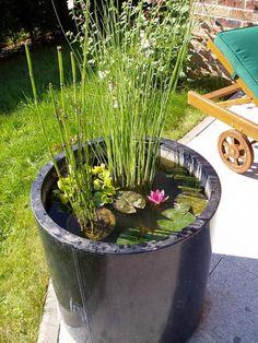 Le mini jardin aquatique conçu dans un bac en zinc