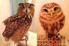 Owl Cafés! -- Grub Street