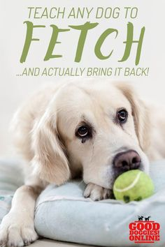Fetch is an easy trick you can teach your dog. Check out these dog training tips on how to teach your dog to fetch. #dogs #dogtricks #dogtraining