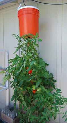 Grow Tomatoes In A Container Upside Down