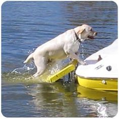 Dog Boat Ladder available @ http://doggyinwonderland.com/item_754/Doggy-Boat-Ladder.htm