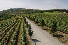 The Best of Washington's Lake Chelan Wineries