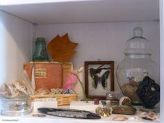 Cabinet de curiosités de Marianne P.