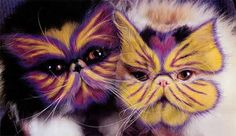 Painted Cats: Real Or Eye Trickery?