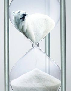 Time is running out for the polar bears...