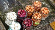 ako namočiť cibuľu v roztoku sódy Small Farm, Acai Bowl, Plum, Diva, Vegetables, Fruit, Food, Gardening, Google