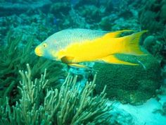 Tropical Fish - fish Photo