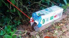 Bez chémie, za jedno euro: Táto pasca na slimáky zachráni vašu úrodu pred najobávanejším škodcom