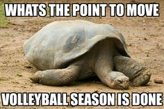Volleyball meme