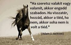 Adam J. Equestrian Quotes, Horse Quotes, Horse Riding, Good Vibes, Buddhism, Karma, Einstein, Jackson, Life Quotes