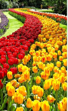 Beautiful keukenhof gardens netherlands