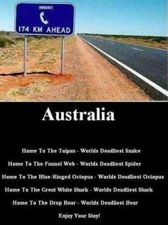 Only saving this to say drop bears dont exist that was a joke we pulled a lon - Koala Funny - Funny Koala meme - - Only saving this to say drop bears dont exist that was a joke we pulled a lon Koala Funny Koala Meme, Funny Koala, Funny Animals, Australian Memes, Aussie Memes, Funny Signs, Funny Memes, Jokes, Weird Facts