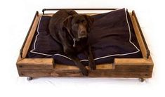 These Reclaimed Dog Beds are Made of Reused Lumber and Metal #pets trendhunter.com. My Pa would love these!