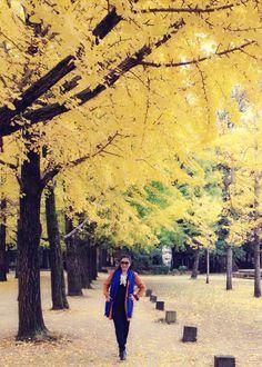 My Seoul Trip - Nami Island in Autumm Oct 2014 Nami Island, Seoul, Country Roads, Autumn, Fall