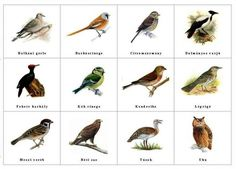 1 million+ Stunning Free Images to Use Anywhere Feeding Birds In Winter, Insect Identification, Tree Day, Free To Use Images, Spring Theme, Nature Journal, Animals For Kids, Love Birds, Bird Feeders