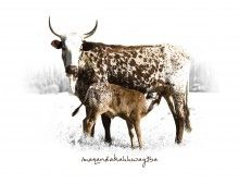Classic nguni photographs of these native cattle in all their glory, showcased on this set of placemats. Set of South African Homes, African Home Decor, Cattle, Arts And Crafts, Delivery, Canvas Prints, Birthday Month, Full Set, Classic