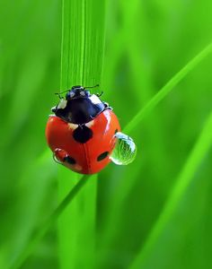 ★ℒ ★By Karayelim Ben Lady Bug Tattoo, A Bug's Life, Macro Photography, Some Pictures, Animals Beautiful, Beautiful Pictures, The Incredibles, Cool Stuff, Animals