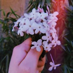 Sky Aesthetic, Flower Aesthetic, Aesthetic Photo, Aesthetic Pictures, Sunset Wallpaper, Flower Wallpaper, Aesthetic Backgrounds, Aesthetic Wallpapers, Tumblr Photography