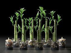 Flori care cresc fara pamant. Frumuseti fara pic de murdarie Bamboo Centerpieces, Panda Birthday, Lily Wedding, Lucky Bamboo, Bamboo Design, Bathroom Interior Design, Candles, Table Decorations, Cheryl