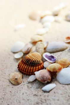Shells at the Seaside I Love The Beach, Summer Of Love, Summer Time, Surf, I Need Vitamin Sea, Am Meer, Ocean Beach, Belle Photo, Under The Sea