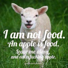 He is not food.