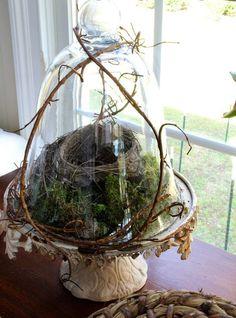 Arrangement mit Moos und Nest unter Glasglocke