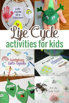 Life cycles of animals, insects and such are fascinating and can be studied at any time. But in Spring, it is especially relevant to study life cycles, so we have put together a great list of resources full of Life Cycle Activities for Kids. Take a look!