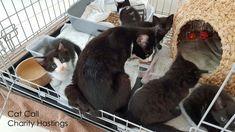 Thank You Asda - Cat Call UK Kittens, Cats, Asda, Cat Food, Charity, Fun, Pictures, Animals, Gatos