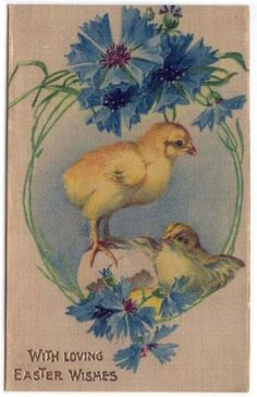 Vintage-Easter-Greetings-PC-Young-Chicks-Blue-Flowers-Printed-on-Silk