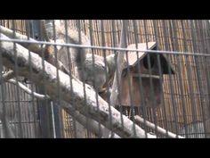リス‐王子動物園(神戸) - YouTube