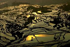 """Irrigated rice paddies at dusk in south China by Feng Jiang Ph.D. from his """"The Wonders of China"""" collection."""