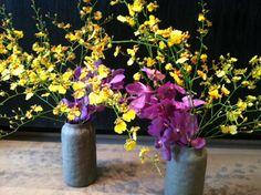 A contemporary look with Oneidium and Mokara orchids