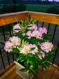 Beautiful flowers Beautiful Flowers, Plants, Photos, Pretty Flowers, Pictures, Photographs, Flora, Plant, Cake Smash Pictures