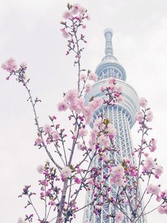 Beautiful, South Korea Seoul Tower